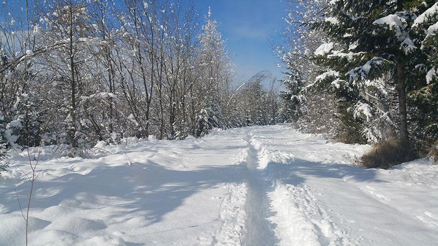 Winteröffnungszeiten bis Mitte Jänner 2020